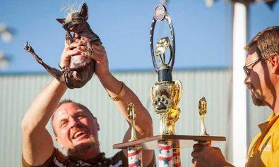 ugliest-dog-winner