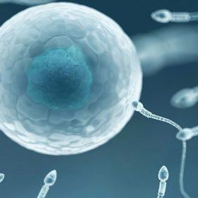 Male Contraceptive Pill
